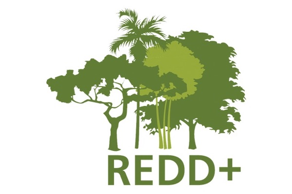 Global Carbon Holding -REDD Logo